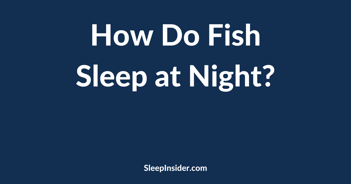 How do fish sleep